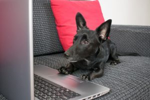 Things Landlords Need to Know Before Choosing to Make Their Properties Dog Friendly